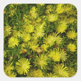 Flores de oro del amarillo de la planta de hielo pegatina cuadrada
