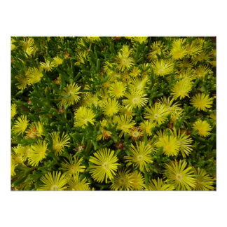Flores de oro del amarillo de la planta de hielo póster