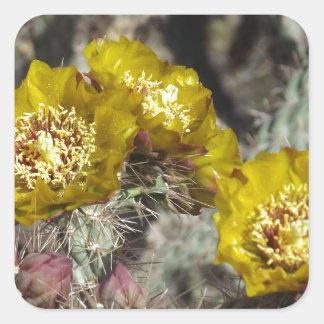 Flores de oro del cactus calcomanías cuadradass