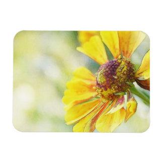 Flores de oro preciosas del Helenium Iman Flexible
