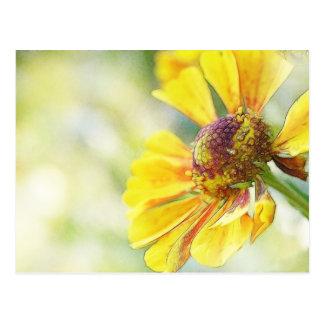 Flores de oro preciosas del Helenium Tarjeta Postal