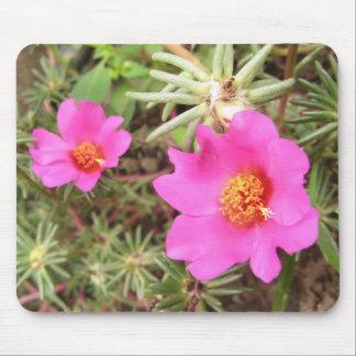 Flores de Portulaca Tapete De Raton