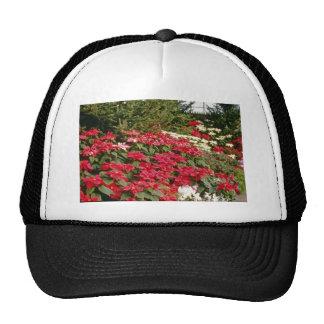 Flores de Pulcherrima del euforbio (Poinsettia) Gorros Bordados