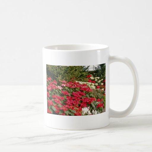 Flores de Pulcherrima del euforbio (Poinsettia) Tazas