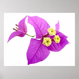 Flores de Santa Rita Poster