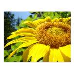 Flores de Sun del texto del personalizar de las po