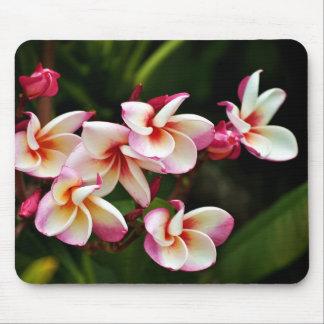 Flores de Tailandia Tapetes De Ratones
