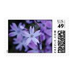 Flores de tierra púrpuras sellos