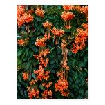 Flores de trompeta postal