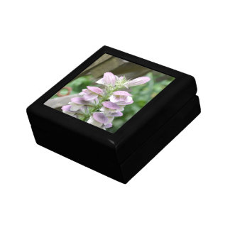 Flores de Turtlehead Caja De Regalo