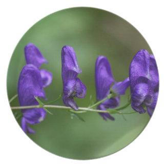 Flores de un Akonite (variegatum del Aconitum) Plato