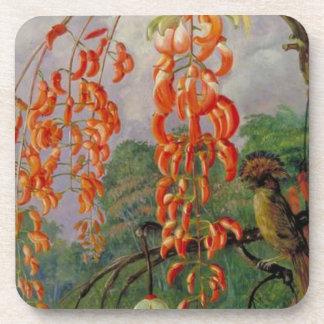 Flores de un árbol coralino y de un rey del posavasos de bebidas