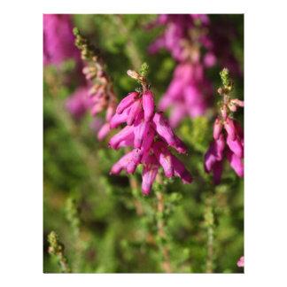 Flores de un brezo de Dorset (cilaris de Erica) Membretes Personalizados