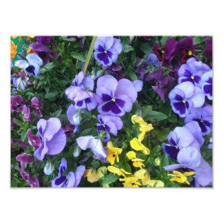 Flores de Victoria Arte Con Fotos