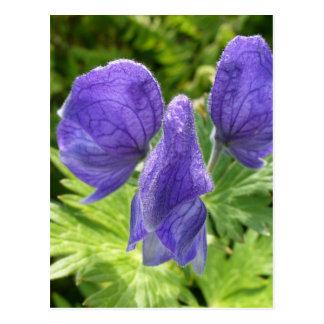 Flores del acónito, isla de Unalaska Postal