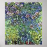 Flores del Agapanthus de Claude Monet Póster