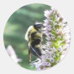 Flores del Agastache con el abejorro Pegatinas Redondas
