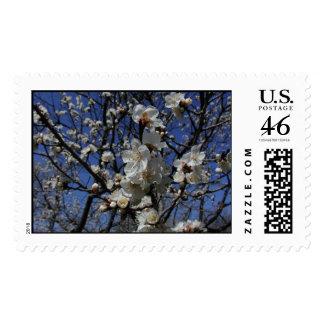 Flores del albaricoque abril de 2002