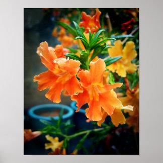 Flores del almizcle póster