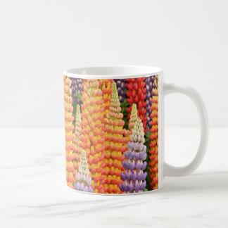 Flores del altramuz en la floración taza clásica