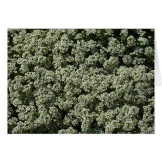 Flores del Alyssum dulce Tarjeta De Felicitación