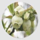 Flores del arándano etiquetas
