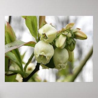 Flores del arándano impresiones