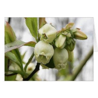 Flores del arándano tarjeton