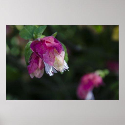 Flores del árbol impresiones