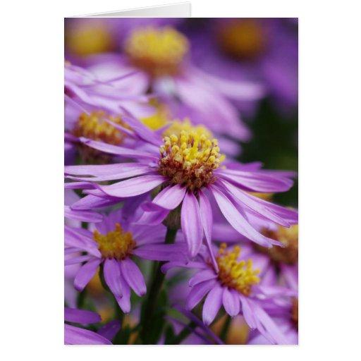Flores del aster en una tarjeta en blanco
