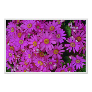 Flores del aster posters