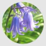 Flores del Bluebell - pegatina