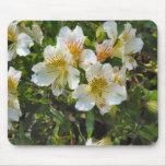 flores del bonito del alstroemeria tapetes de ratón