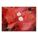 Flores del Bougainvillea Tarjeton