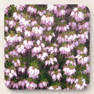 Flores del brezo púrpura posavasos
