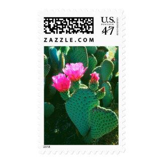 Flores del cactus de Beavertail Sello