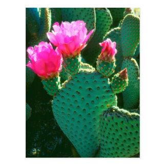Flores del cactus de Beavertail Tarjeta Postal