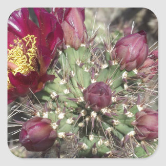 Flores del cactus de Borgoña Calcomania Cuadradas Personalizada