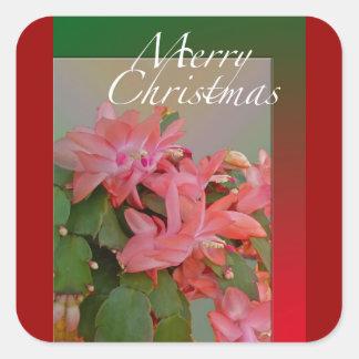 Flores del cactus de navidad de las Felices Pegatina Cuadrada