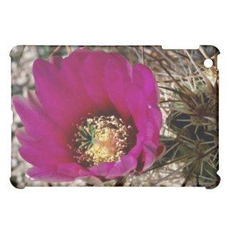 Flores del cactus del calicó o de erizo