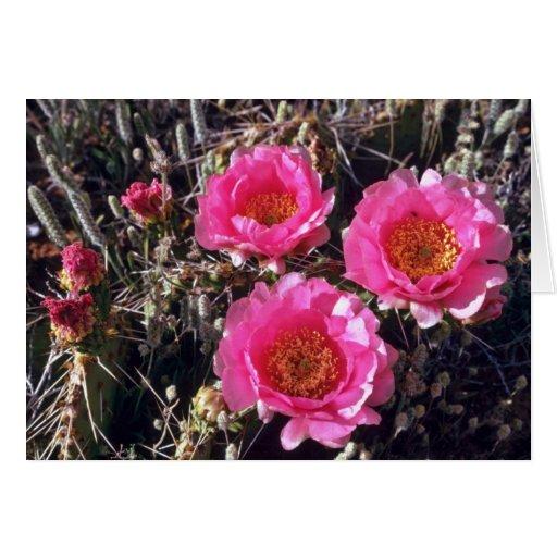 Flores del cactus del higo chumbo de la Rojo-Flor Felicitaciones