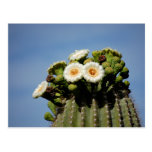 Flores del cactus del Saguaro Postal