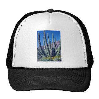Flores del cactus del tubo de órgano gorro de camionero