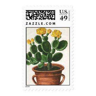 Flores del cactus del vintage, plantas suculentas sellos