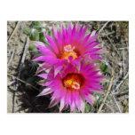 Flores del cactus F0005 Postales
