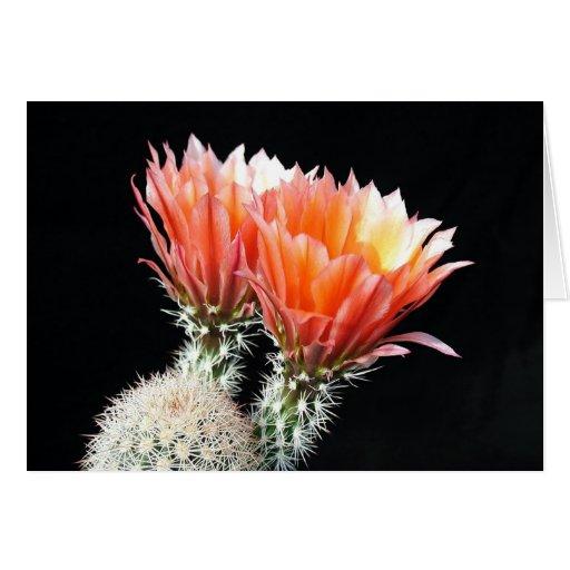 Flores del cactus felicitación