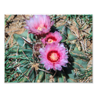 Flores del cactus fotografía