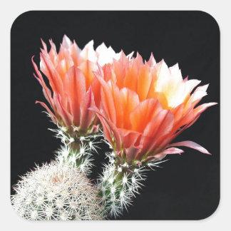 Flores del cactus colcomanias cuadradas personalizadas