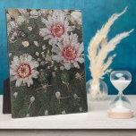 Flores del cactus placas con foto