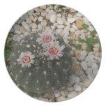Flores del cactus plato de comida